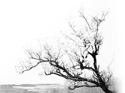 这棵榆树的样子倒不怎么迷人